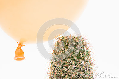 Balloon landing on a cactus