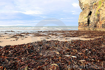 Ballybunion beach cliff sea kelp