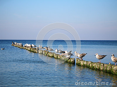 Baltic Sea. Seagulls sitting on the breakwater and the water are viewing