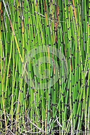 Bamb del jard n im genes de archivo libres de regal as - Bambu para jardin ...