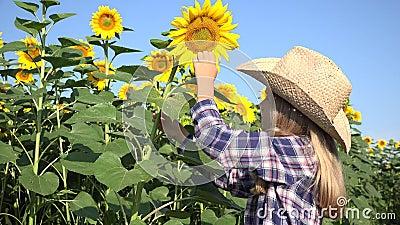 Bambino nel giacimento del girasole, ragazza dell'agricoltore che studia gioco nel raccolto agrario 4K stock footage