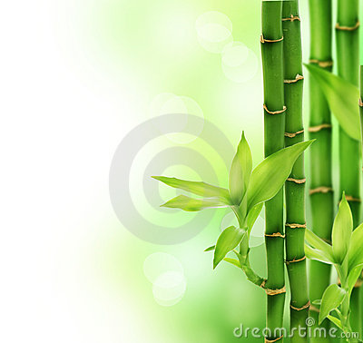 Free Bamboo Royalty Free Stock Photos - 11109598