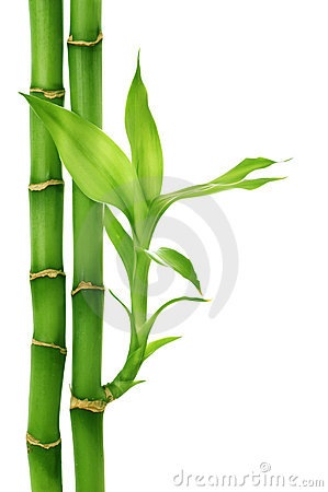 Free Bamboo Royalty Free Stock Image - 11950616