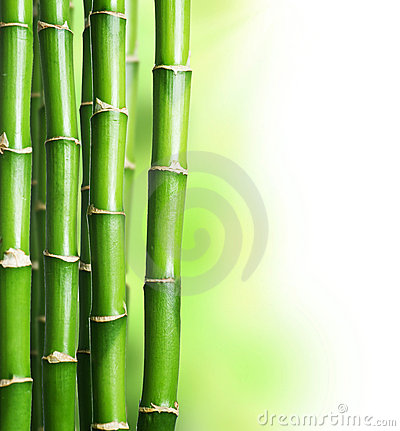 Free Bamboo Stock Photo - 16566670