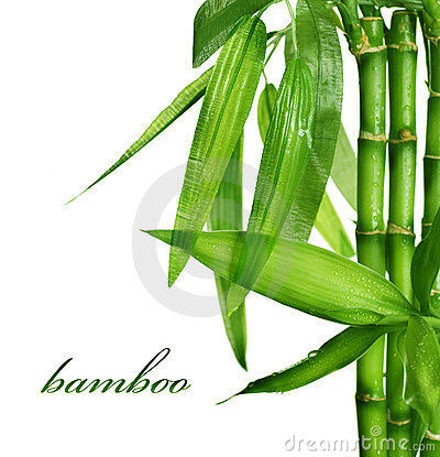 Free Bamboo Stock Photo - 16566720