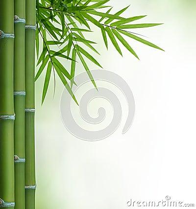 Free Bamboo Royalty Free Stock Photography - 25488377