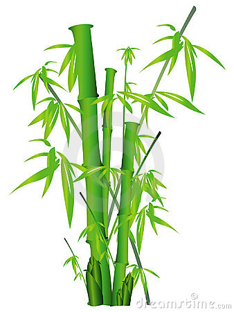 Free Bamboo Stock Photography - 6709712
