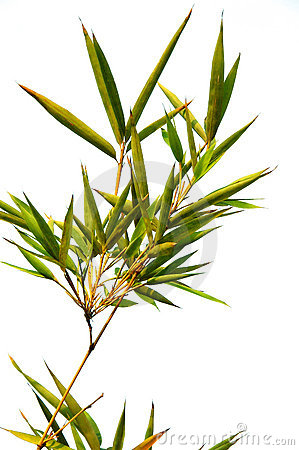 Free Bamboo Stock Photo - 7054420