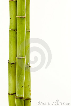 Free Bamboo Royalty Free Stock Photography - 9353717