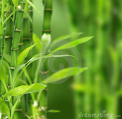Free Bamboo Stock Images - 9664364