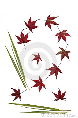 Free Bamboo And Acer Leaves Stock Images - 3131554