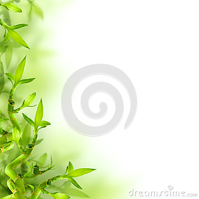 Free Bamboo And Green Leaves, Background Royalty Free Stock Photo - 28790825