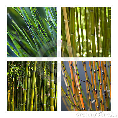 Bamboo and aquatic plants