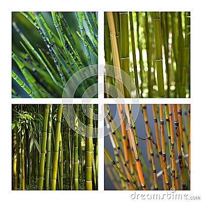 Bamboo and aquatic plants