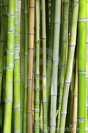 Free Bamboo Background Stock Photos - 3221203