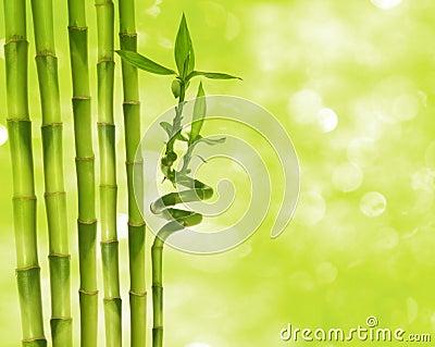 Bamboo and boheh