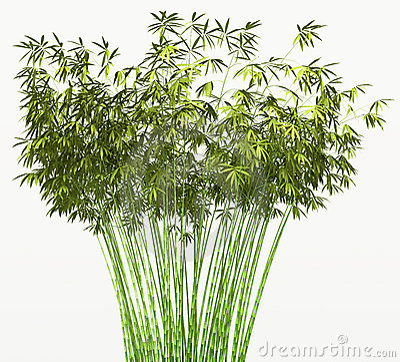 Bamboo bush or tangle isolated