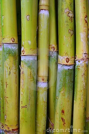 Free Bamboo Cane Food Sugar Green Trunks Stock Image - 18499041