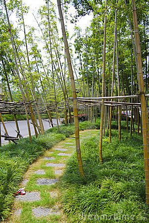 Free Bamboo Feilds, China Stock Photos - 4522843