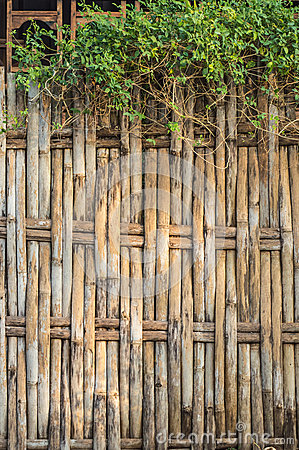 Bamboo fence