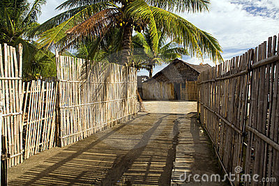 Bamboo fence road
