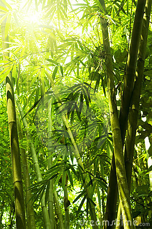 Free Bamboo Forest Stock Photos - 10234193