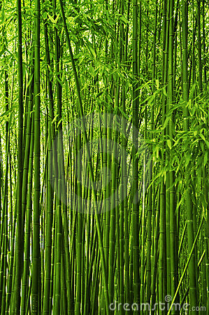 Free Bamboo Forest Stock Photography - 14359112