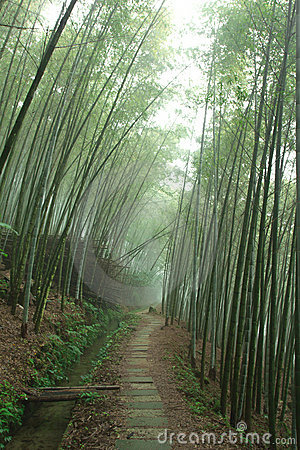 In bamboo forest