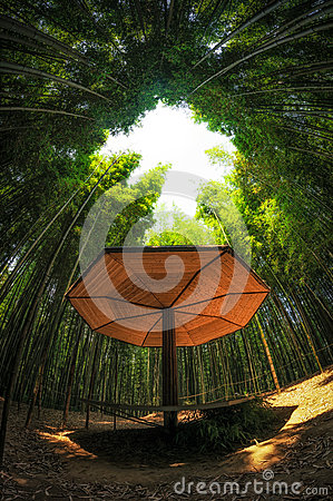Free Bamboo Forest Royalty Free Stock Photos - 41954228
