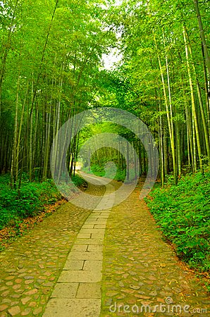 Bamboo forest and Alley