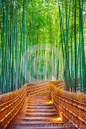 Free Bamboo Forest In Kyoto, Japan Royalty Free Stock Photo - 106095155