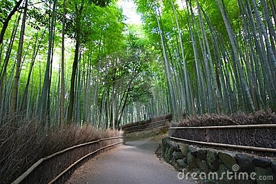 Bamboo forest near Kyoto, Japan