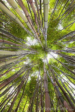 Free Bamboo Forest Tropical Exotic Green Background Stock Images - 11272714
