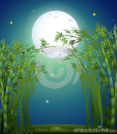 A bamboo forest under the bright fullmoon
