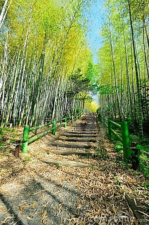 Bamboo Forest Walk Track
