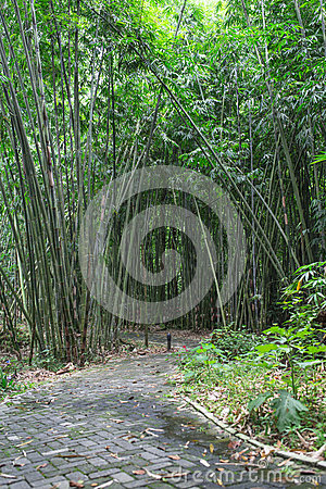 Bamboo Forest Walkway