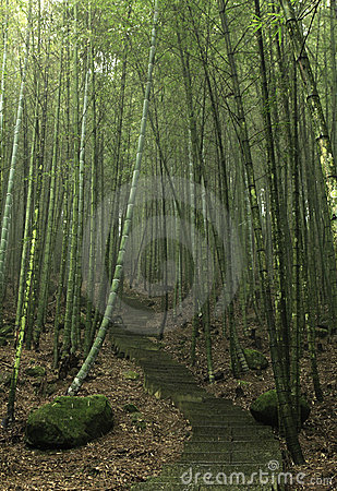 bamboo forests