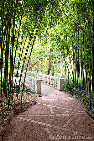 Bamboo garden with river and bridge