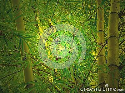 Bamboo glow