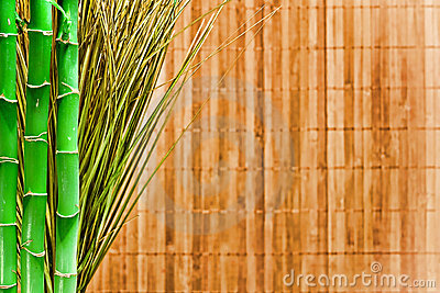 Bamboo and Grass Grunge Background