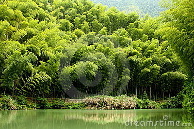 Bamboo grave by the lakeside