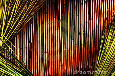 Bamboo and Green Grass Background