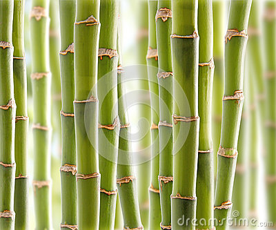 Bamboo Jungle Royalty Free Stock Images - Image: 26757139