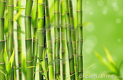 Bamboo jungle background