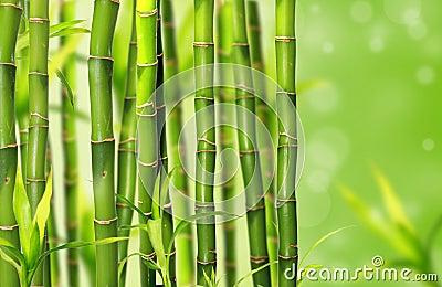 Bamboo jungle background