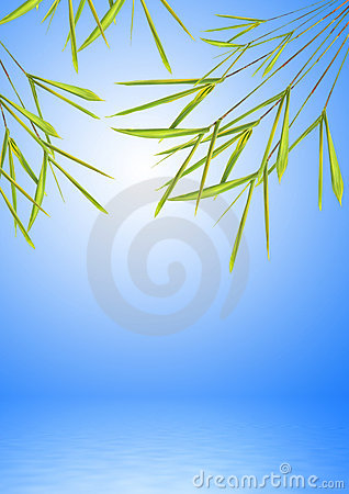 Bamboo Leaf Grass over Water