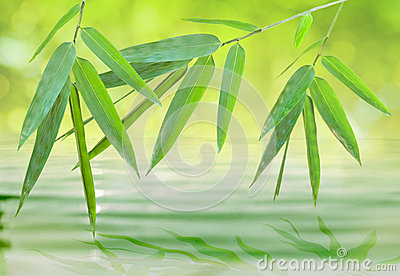 Bamboo leaf over water (spirit of zen)