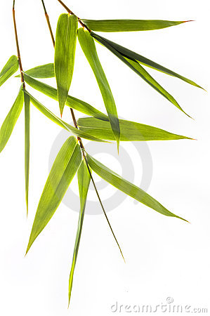 Free Bamboo Leafs Royalty Free Stock Images - 5488489