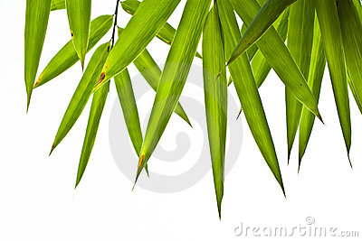 Bamboo Leaves Stock Photo - Image: 22673070