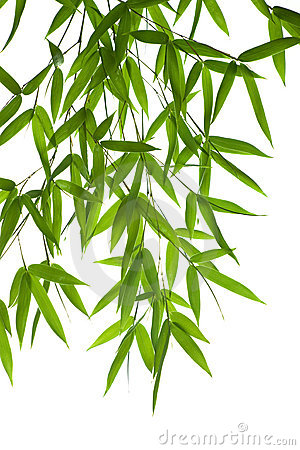 Free Bamboo- Leaves Stock Photography - 3302852